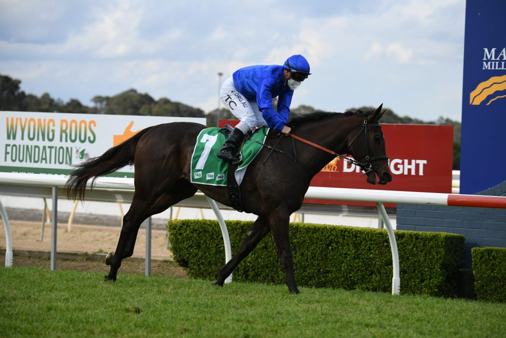 FOUR PILLARS CANDIDATES ON SHOW AT WYONG 3