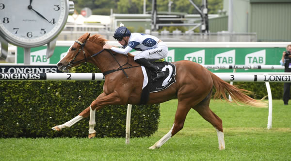 Interest building in Wyong Magic Millions 2YO 7